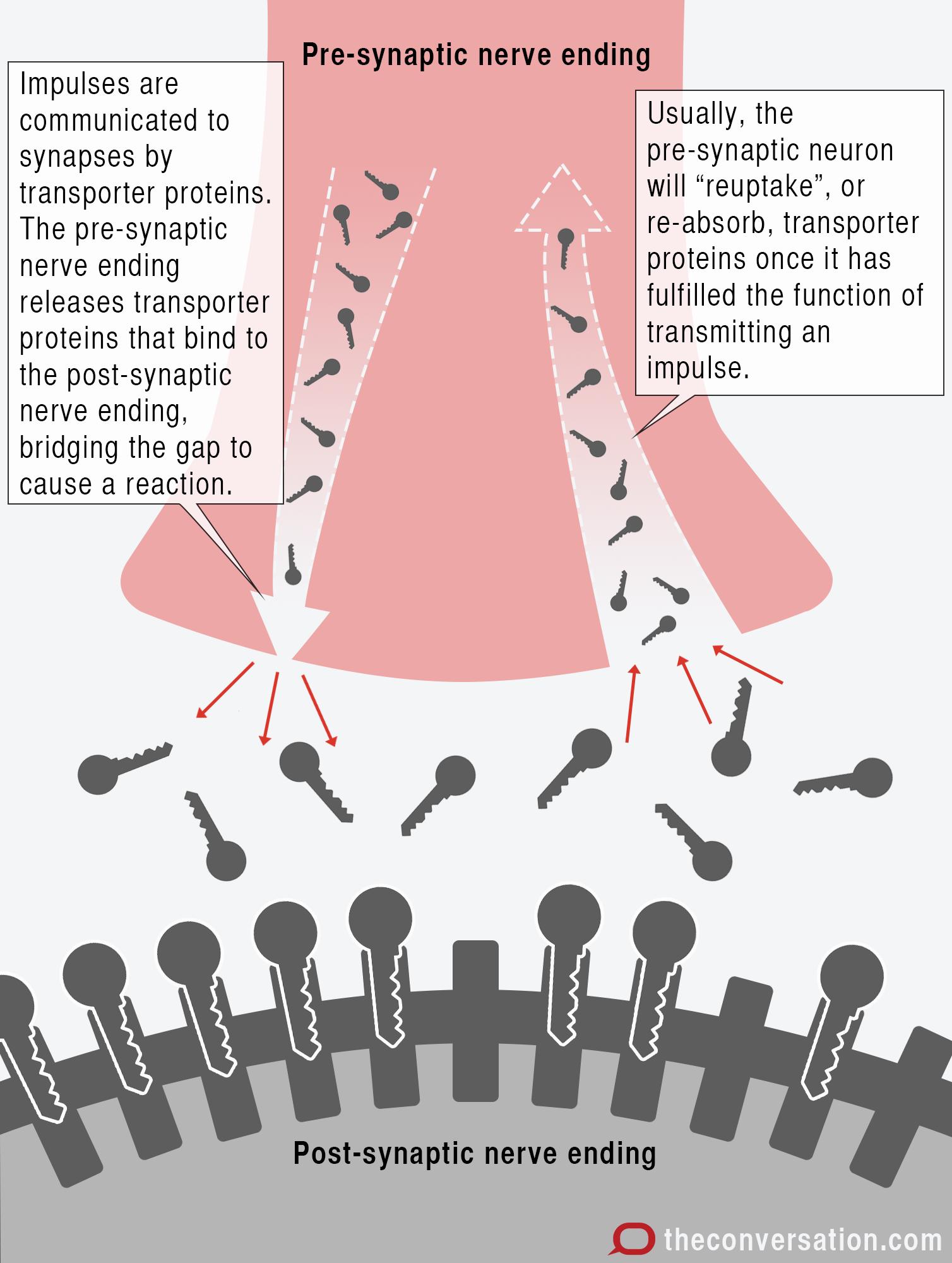Membrane transport inhibitors